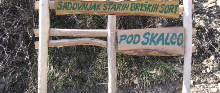 Vzorčni sadovnjak starih sadnih sort v Kojskem