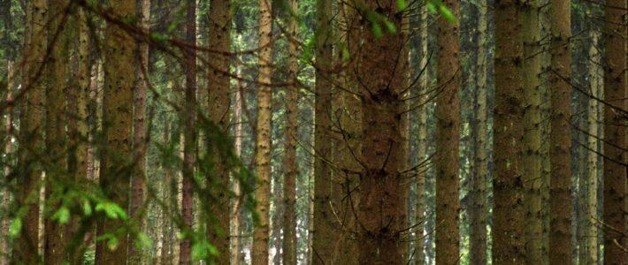 Dobre prakse: Povečanje vrednosti lokalnih gozdov – daljinski sistemi ogrevanja na lesno biomaso