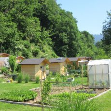 Delavnica Urbani vrtovi po meri lokalne skupnosti